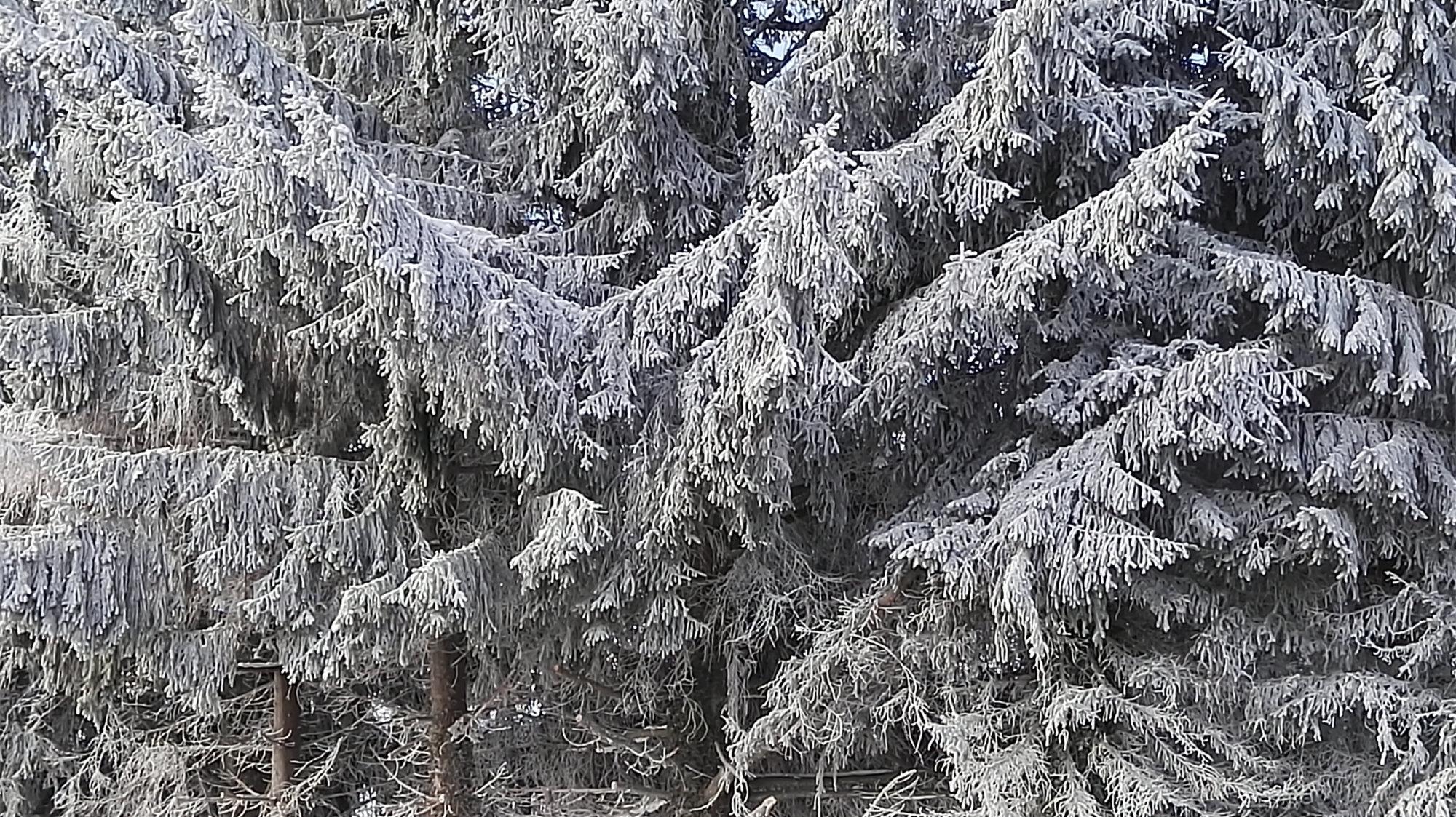 Winter bei der Teamwelt in Höchenschwand